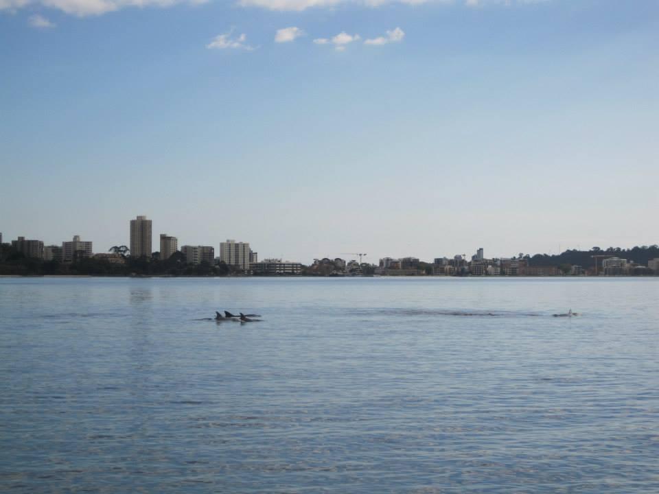delfinerswanriver
